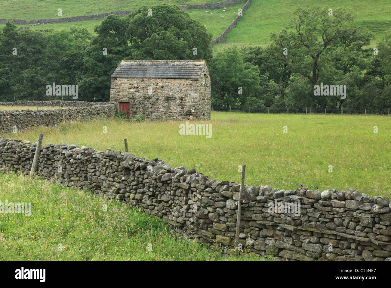 Stone wall and barn in summer near Muker in Swaledale, Yorkshire, England - Stock Image