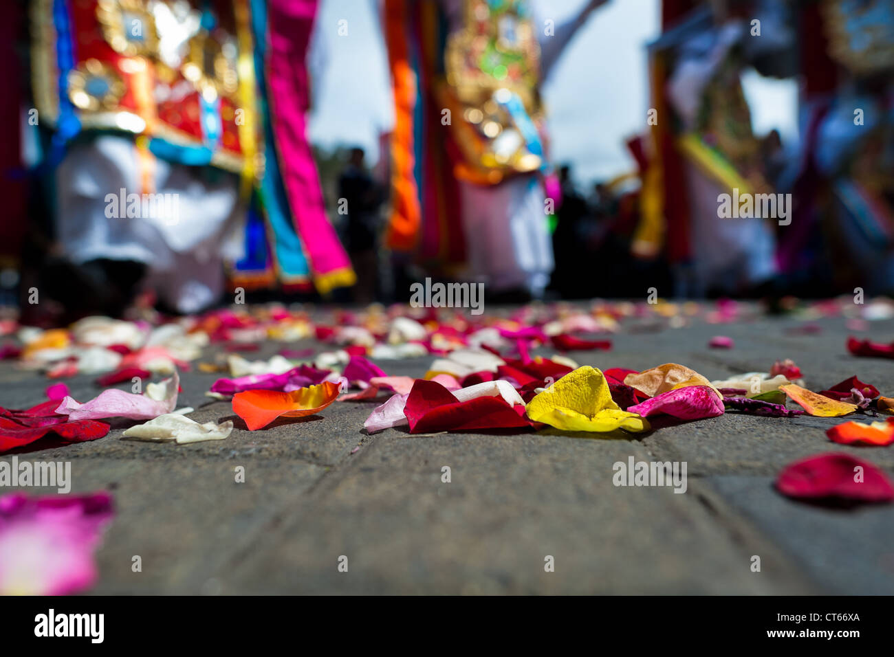 Colorful petals on the ground seen during the religious parade within the Corpus Christi festival in Pujilí, - Stock Image