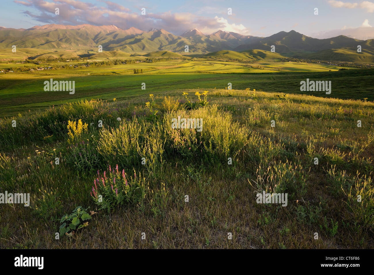 Meadow on Norus dale, northern Kyrgyzstan Stock Photo