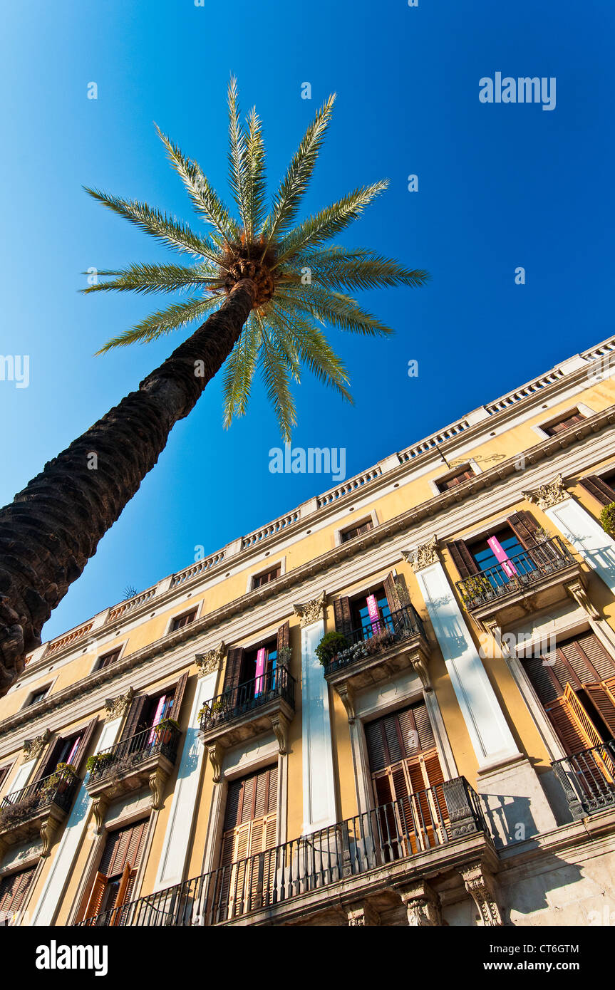 Palm tree in Plaça Reial or Plaza Real, Barcelona, Catalonia, Spain - Stock Image