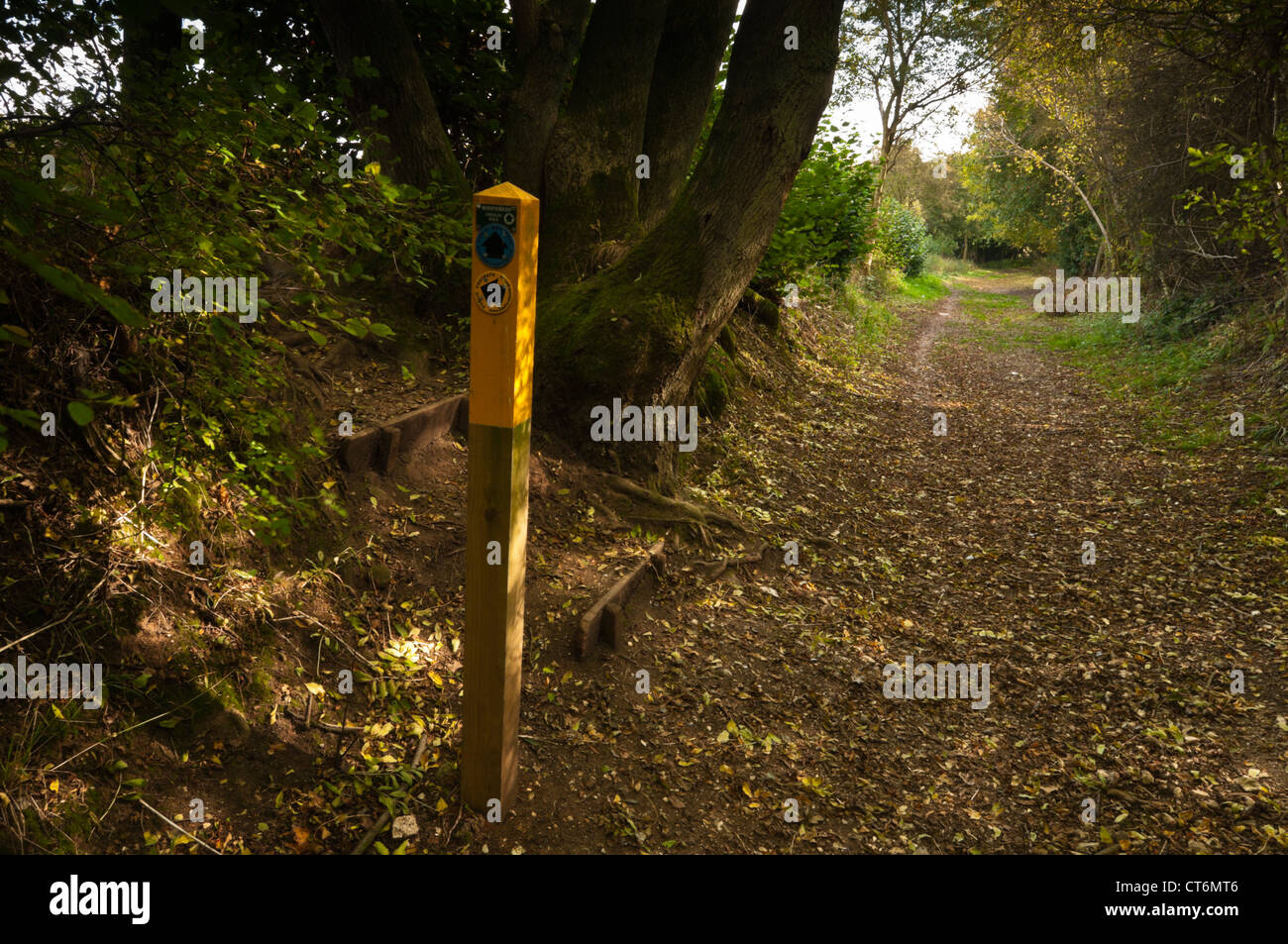 A way-marked post in the sunken track of the Icknield Way on the Dunstable Downs, Chiltern Hills, Bedfordshire, - Stock Image