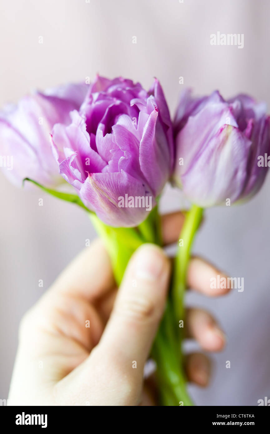 Women's hand holding small bouquet of three purple tulips against the light blurring background. Shallow DOF - Stock Image