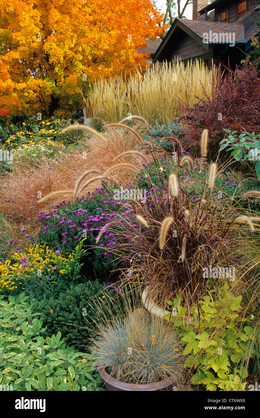 FRONT YARD GARDEN IN ST. PAUL, MINNESOTA. FALL. BLUE FESCUE Stock ...
