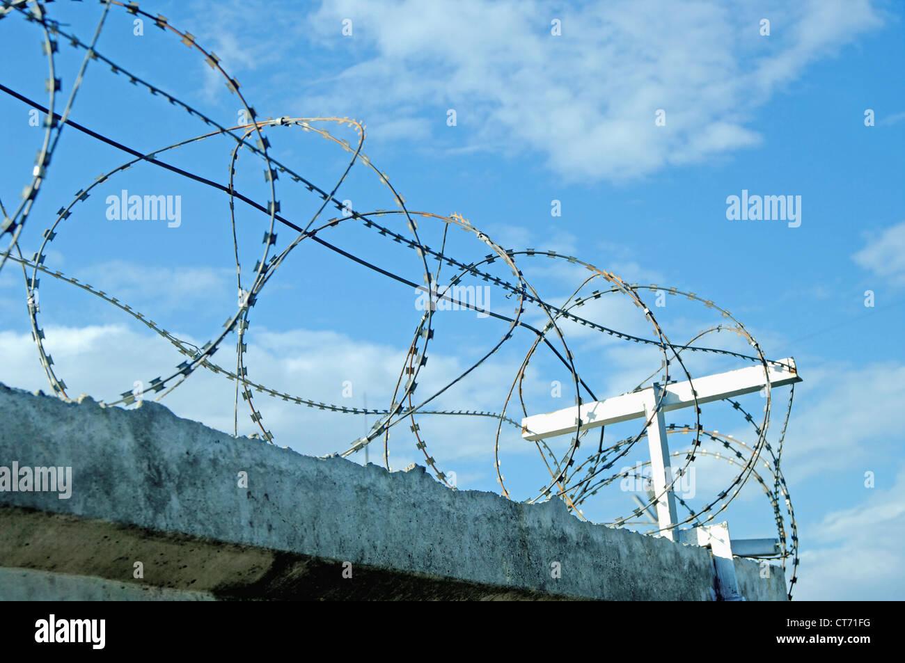 Barbed Wire Jellyfish - WIRE Center •