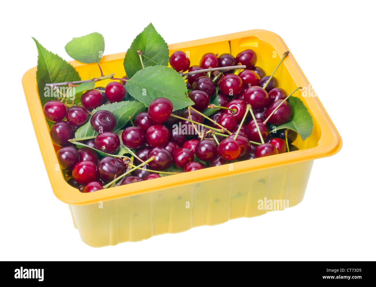 Used yellow plastic container with red black ripe garden cherries berries and leaves. Isolated, selective focus - Stock Image