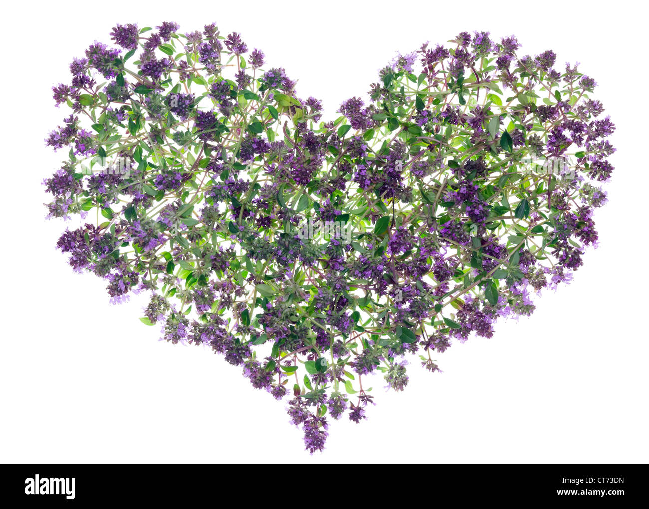 Abstract Heart made from forest Oregano (Thyme) medicinal spice plant. Isolated - Stock Image
