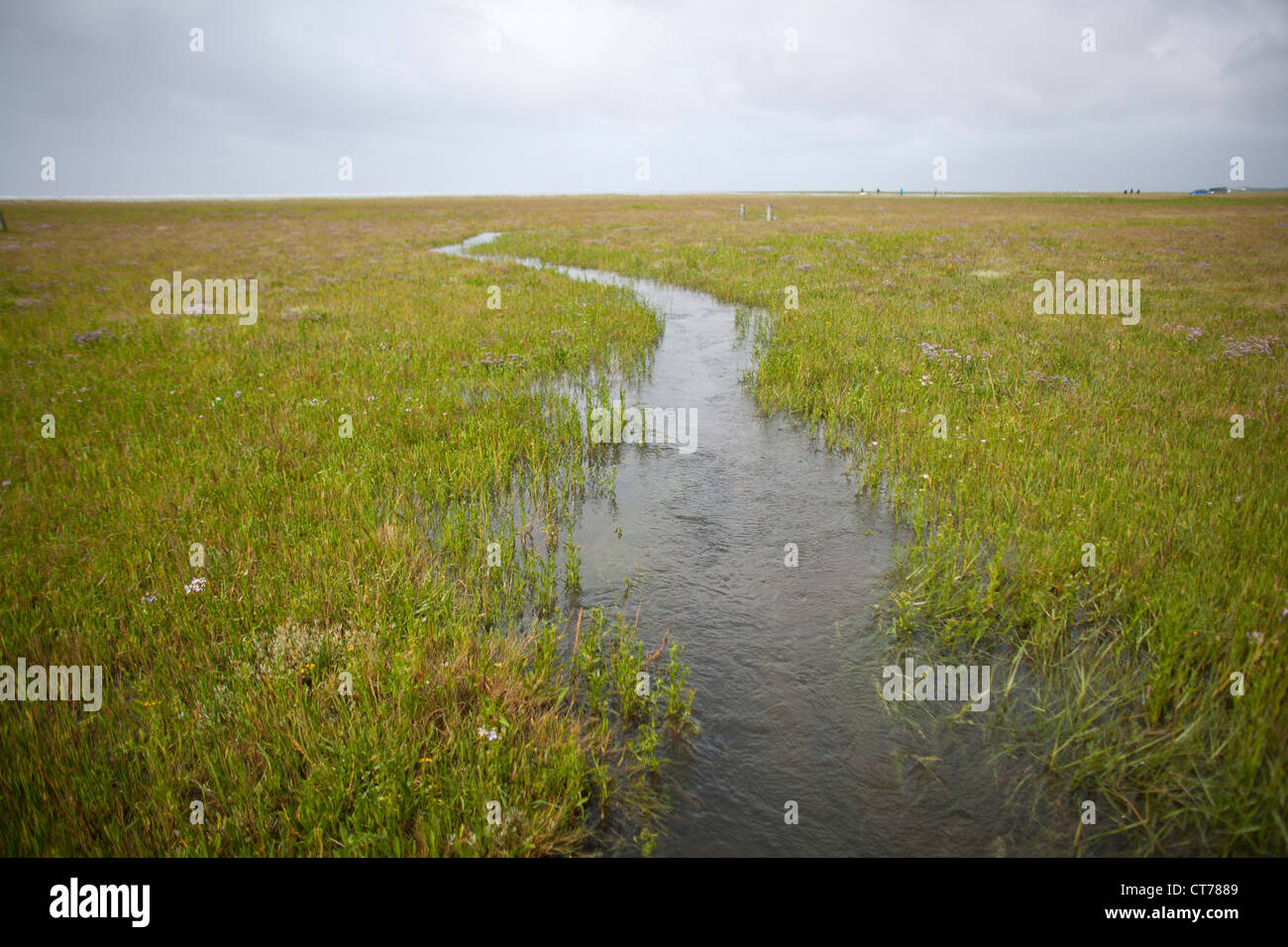 brook flowing though meadow towards sea - Stock Image