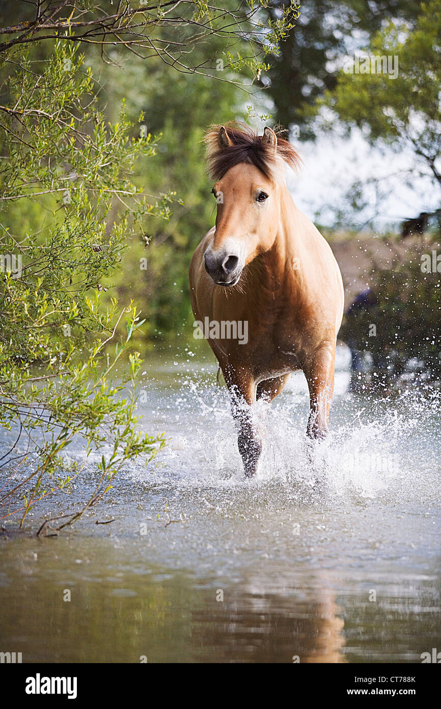 brown horse in water Stock Photo