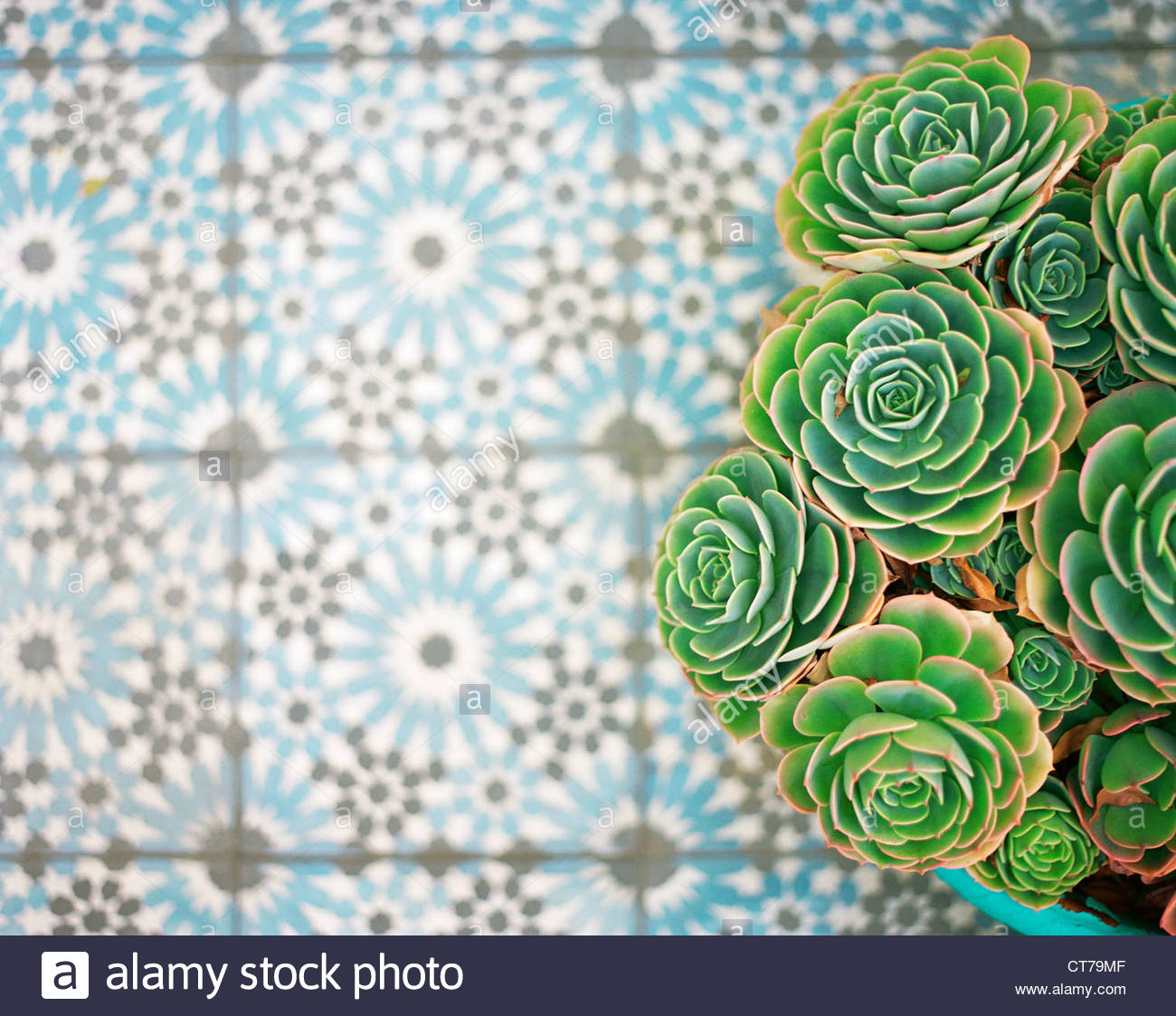 Overhead view of cacti on tiled floor - Stock Image