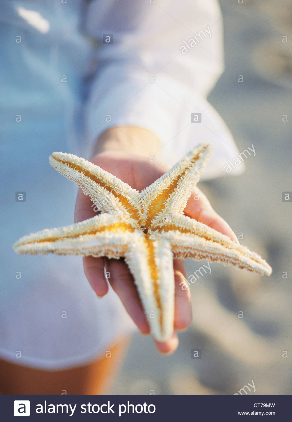 Starfish Anatomy Stock Photos & Starfish Anatomy Stock Images - Alamy