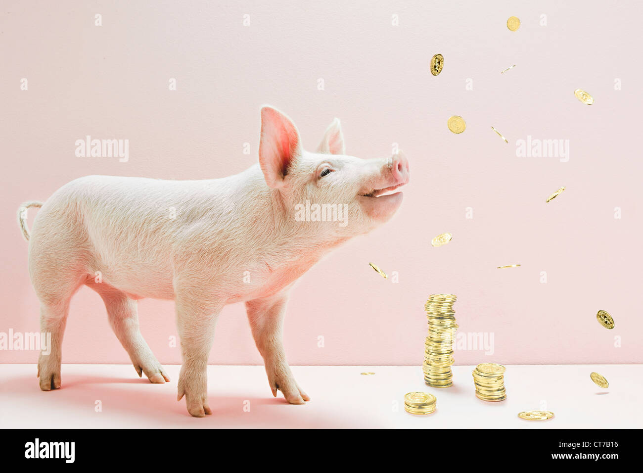 Piglet and falling coins Stock Photo