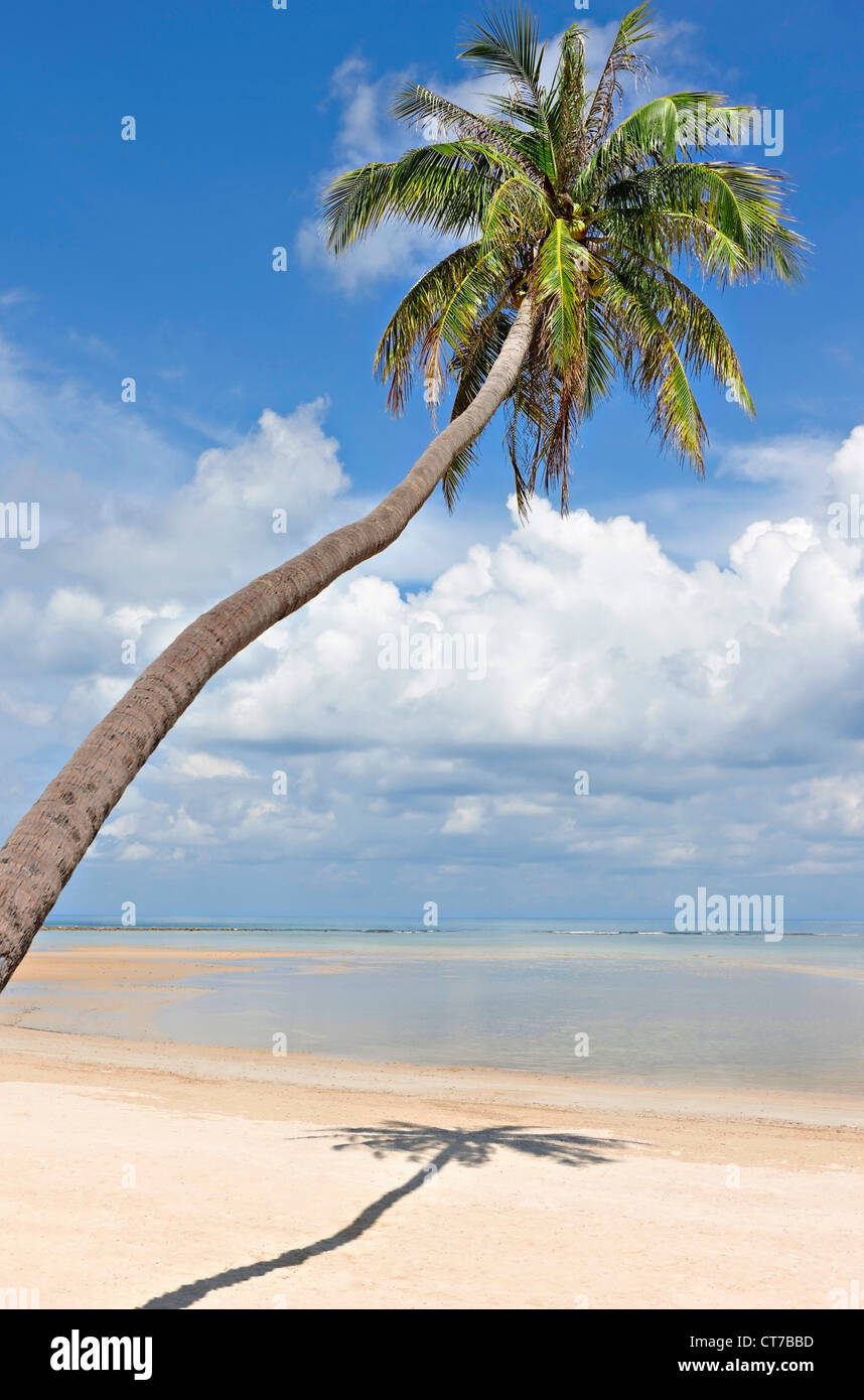 Palm tree on deserted Natien Beach, Koh Samui, Thailand - Stock Image