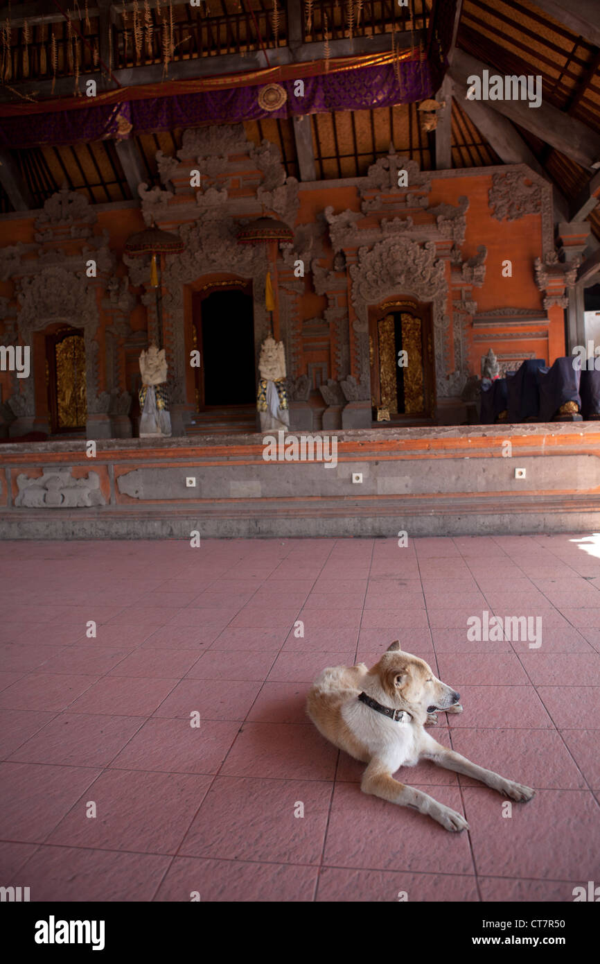 A feral dog relaxing in the shade of a temple. Ubud, Bali, Indonesia Stock Photo