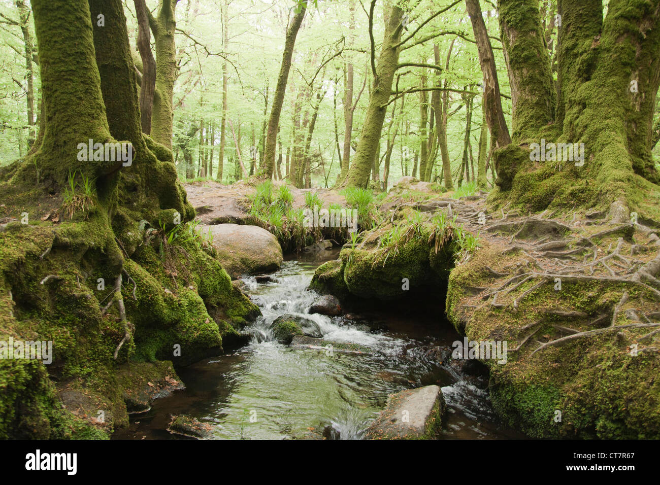 Flowing stream in an English forest, UK. - Stock Image