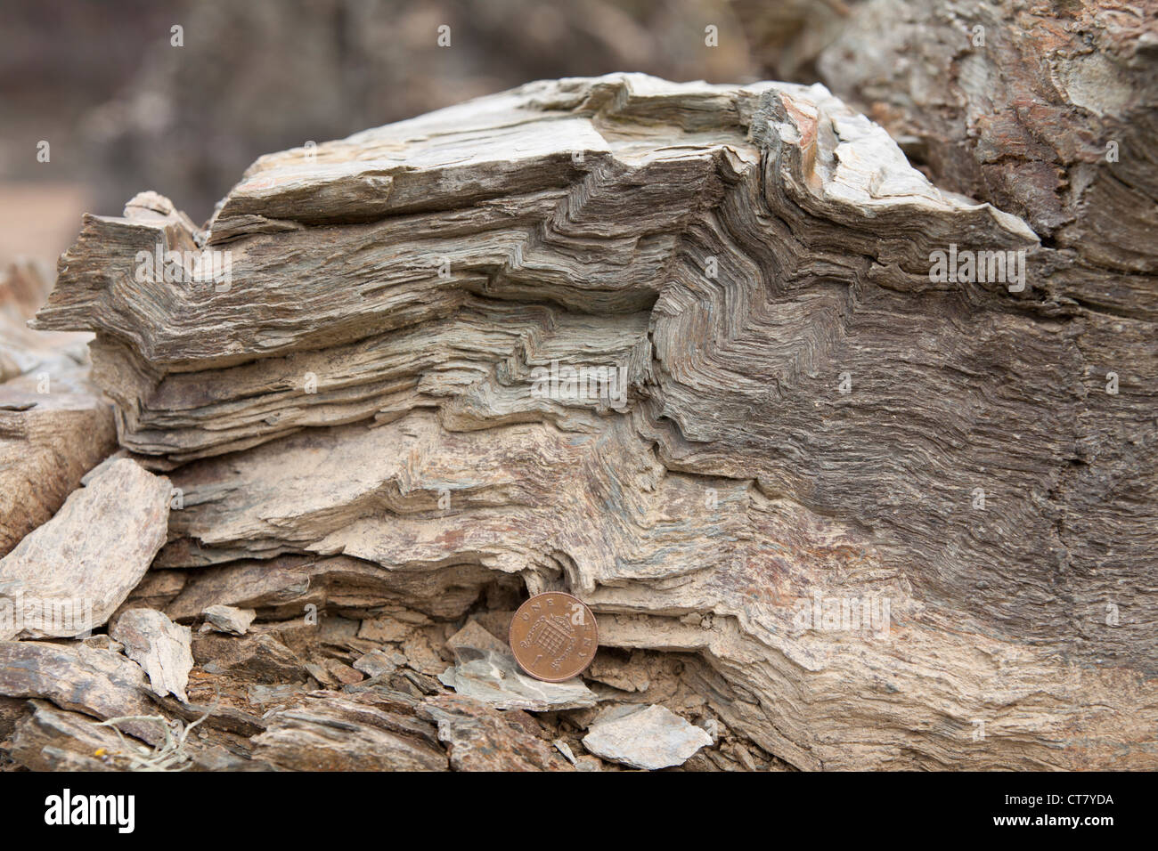 Thrust folded schist outcrop. - Stock Image
