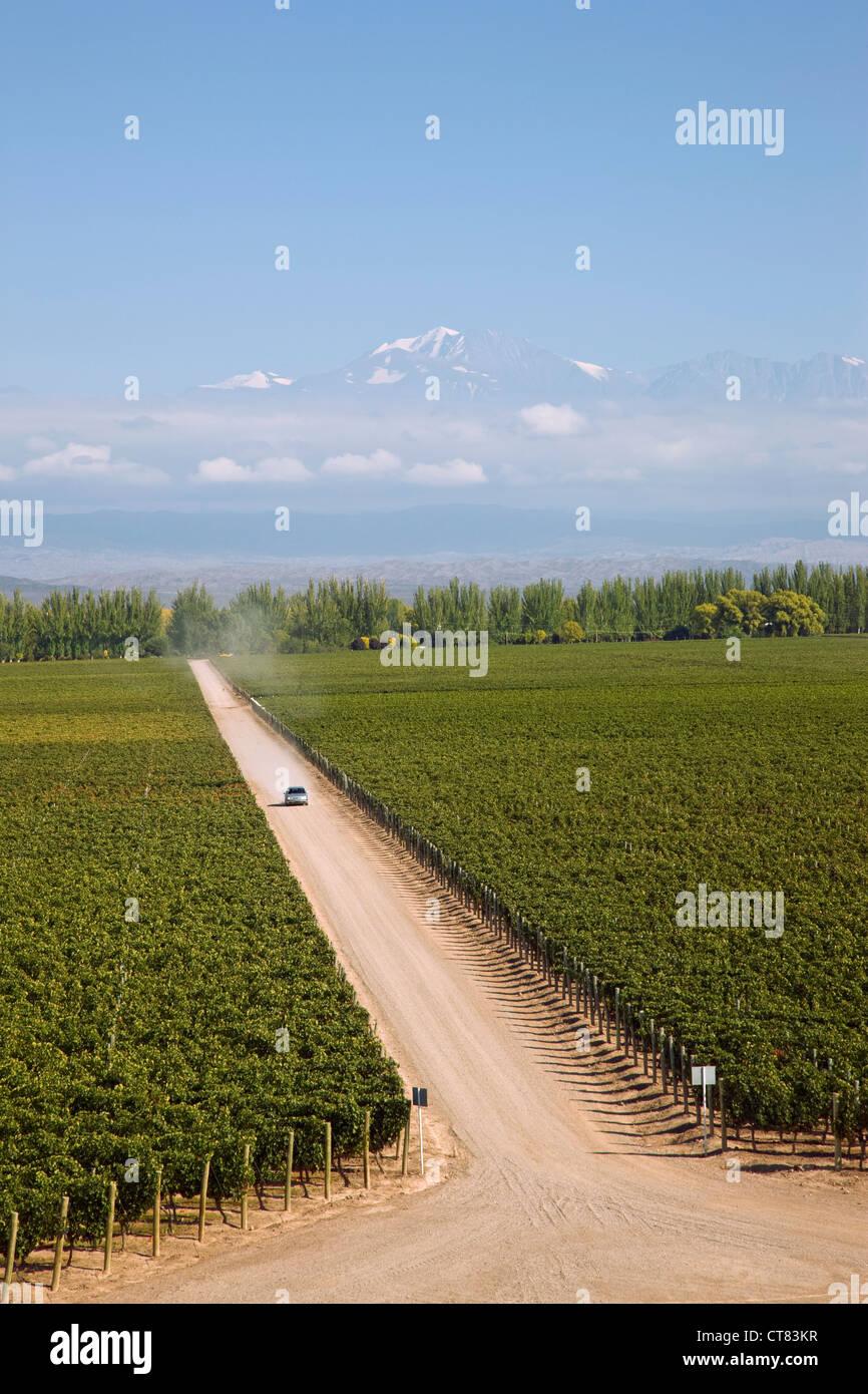 Catena Zapata bodega vineyard - Stock Image