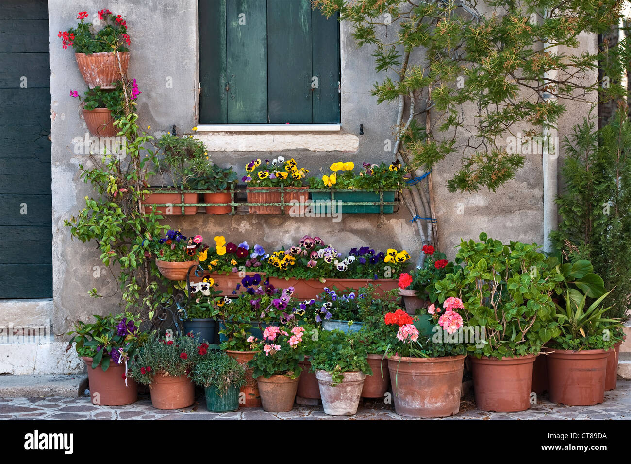 Venice, Italy. Pots of flowers outside a green,shuttered