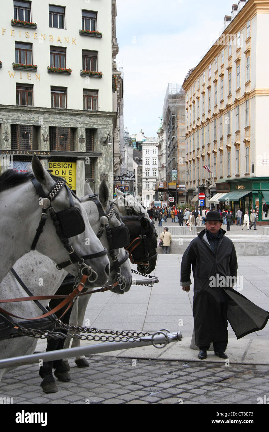 Vienna, coachman with his horses - Stock Image