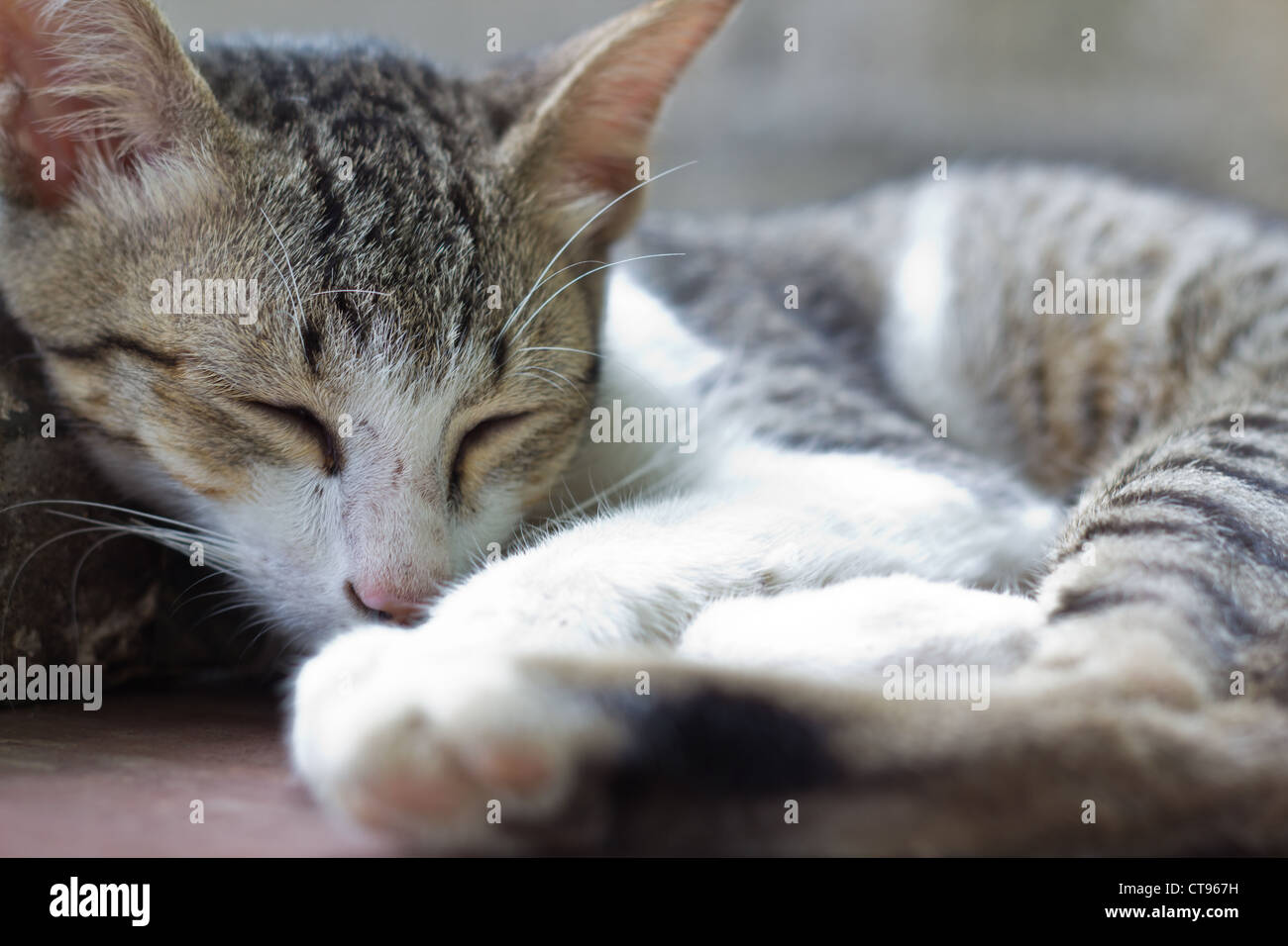 Adorable Young Cat while sleeping. - Stock Image