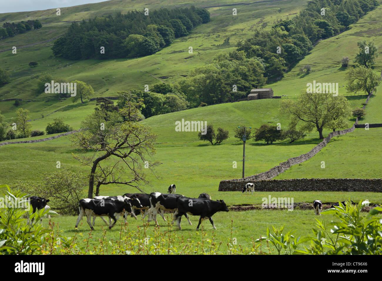 Bishopdale, Yorkshire Dales National Park. - Stock Image