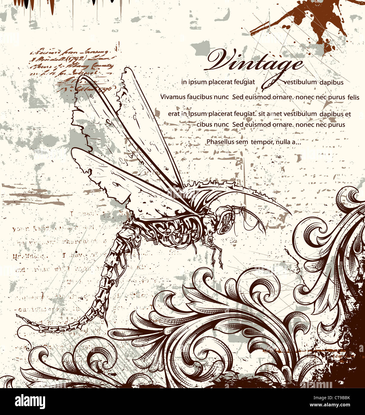 vintage ilustration with dragonfly - Stock Image