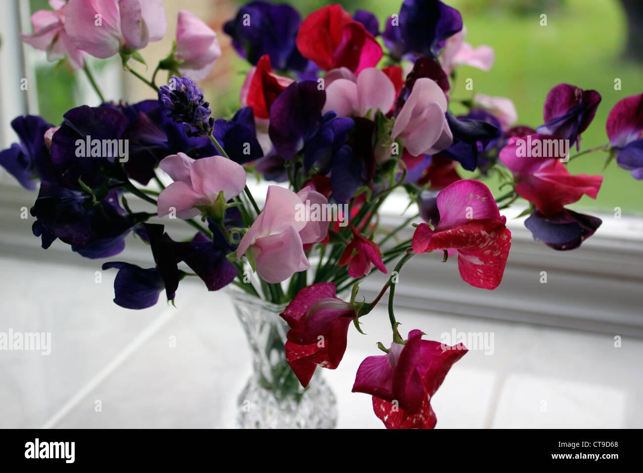 English sweet peasJuly - Stock Image
