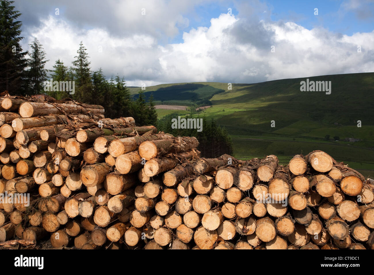 Forestry cut logs, log, timber, felled tree, High Houses  Forest in Snaizeholme off Widdale Timber plantation, Hawes - Stock Image