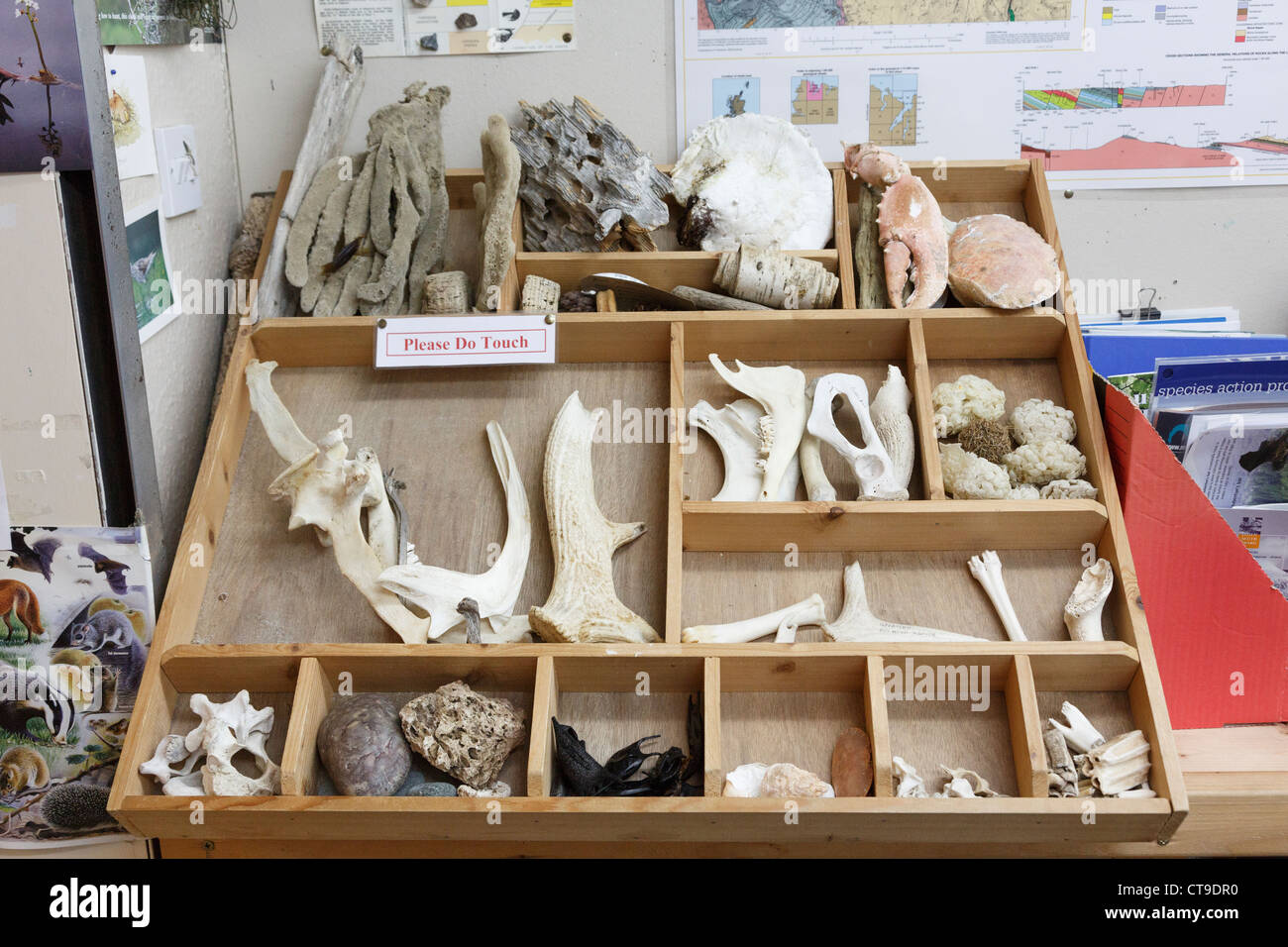 Display of tactile animal specimens to touch in the Visitor Centre in Durness, Sutherland, Highland, Scotland, UK, - Stock Image