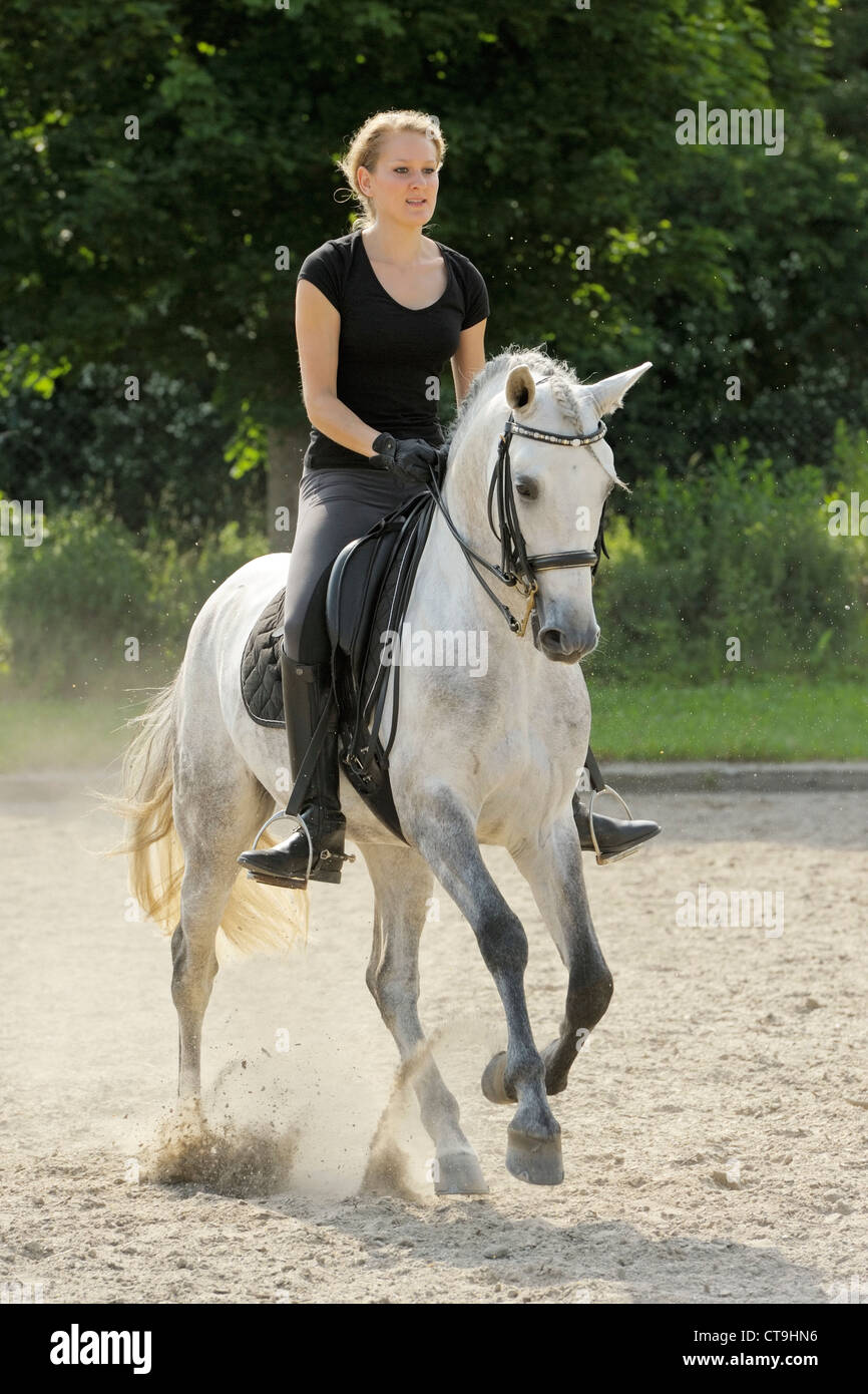 Woman riding dressage on back of a Lusitano horse stallion cantering - Stock Image
