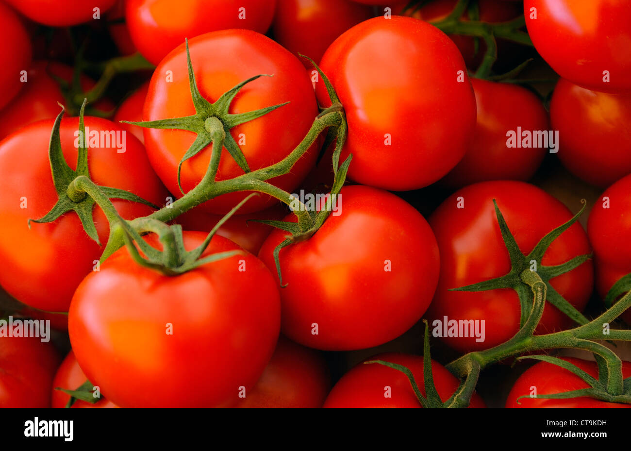 FRESH TOMATOES ON THE VINE IN A  FRENCH  MARKET - Stock Image