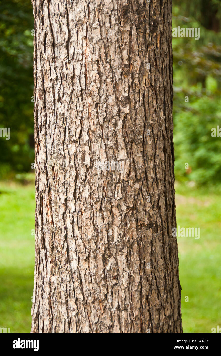 tree trunk - Stock Image