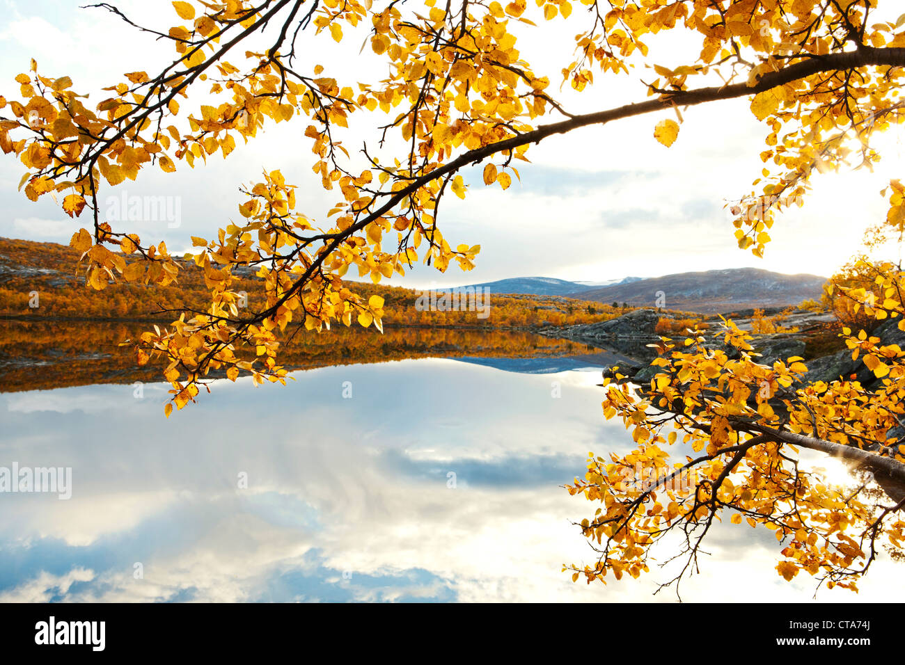 Rocky landscape with birch trees at a lake north of the arctic circle, Saltdal, Junkerdalen national park, trekking - Stock Image