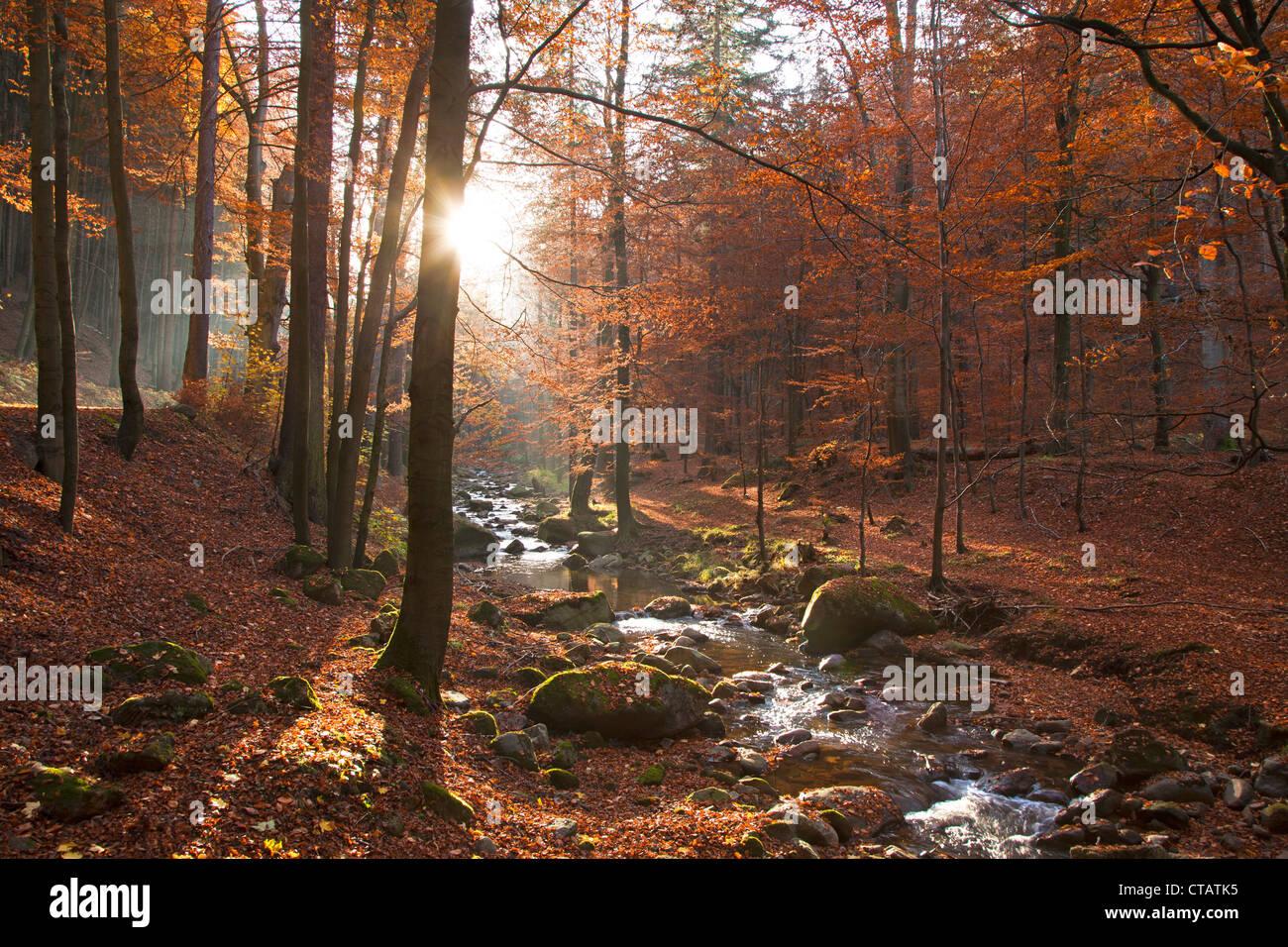 Autumnal forest at Ilse valley, Heinrich Heine hiking trail, near Ilsenburg, Harz mountains, Saxony-Anhalt, Germany, - Stock Image