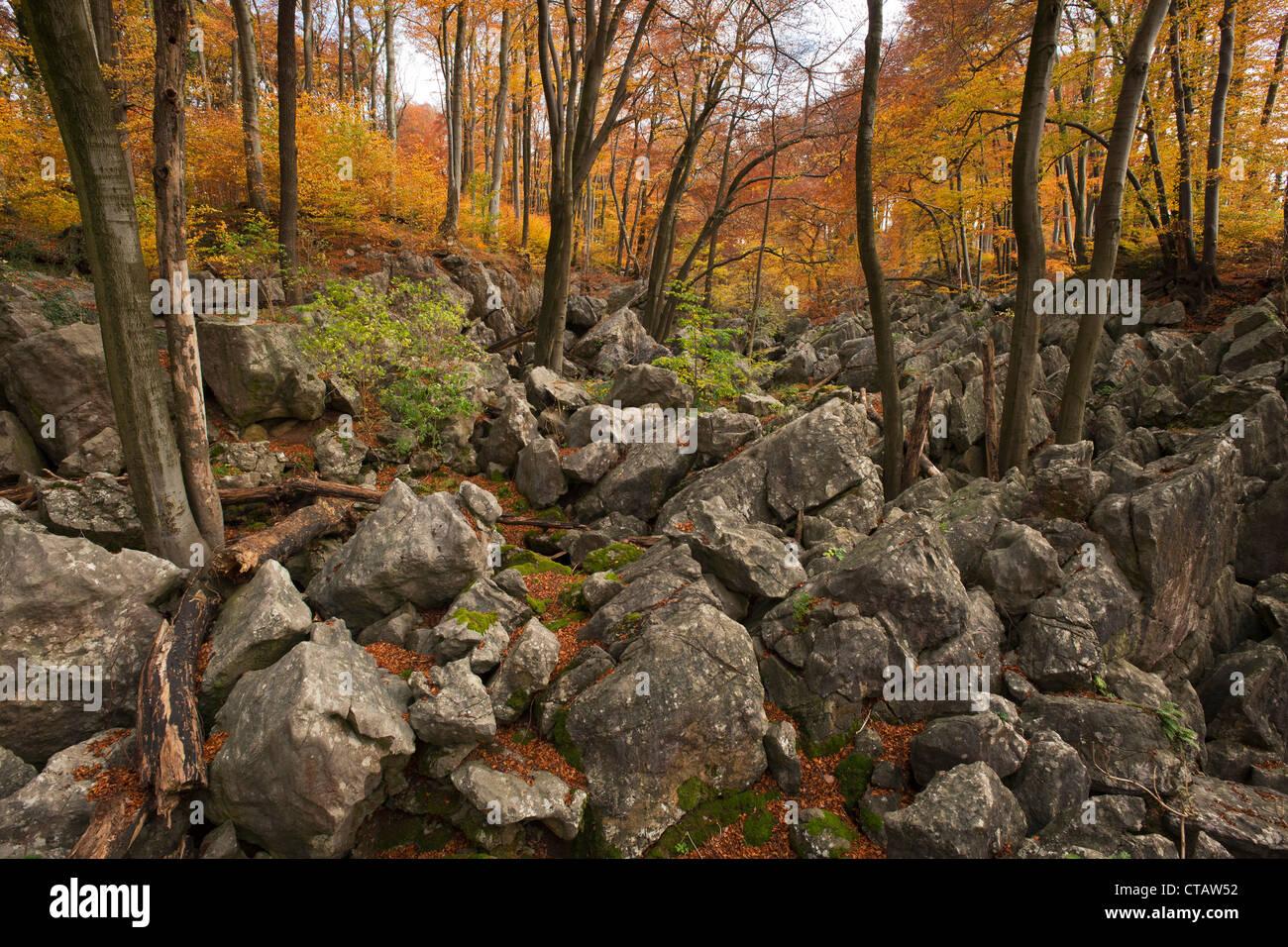 Autumnal forest at nature reserve Felsenmeer, Sauerland, North Rhine-Westphalia, Germany, Europe - Stock Image
