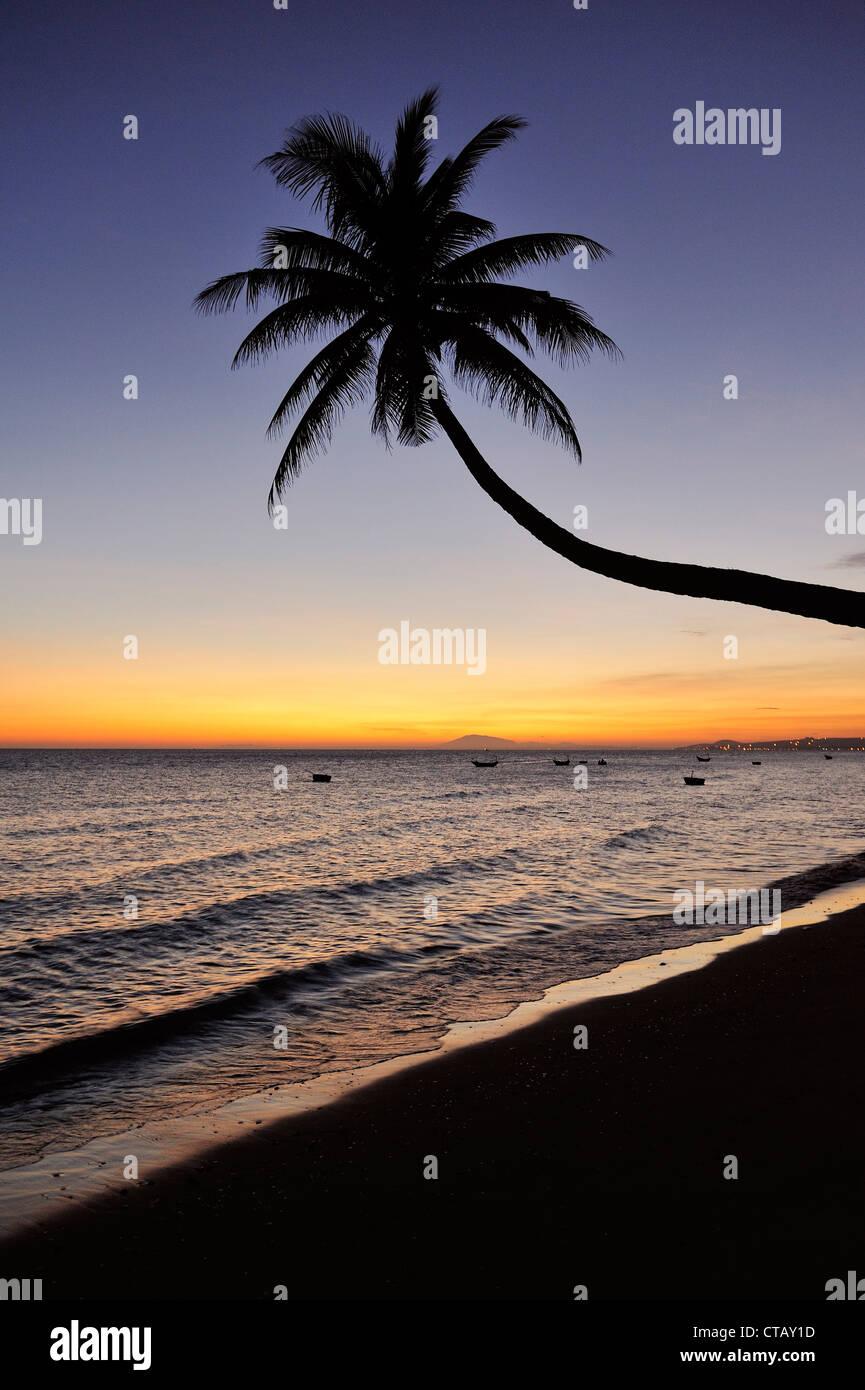 Crooked palm tree at beach sunset, South China Sea, Mui Ne, Binh Thuan, Vietnam - Stock Image