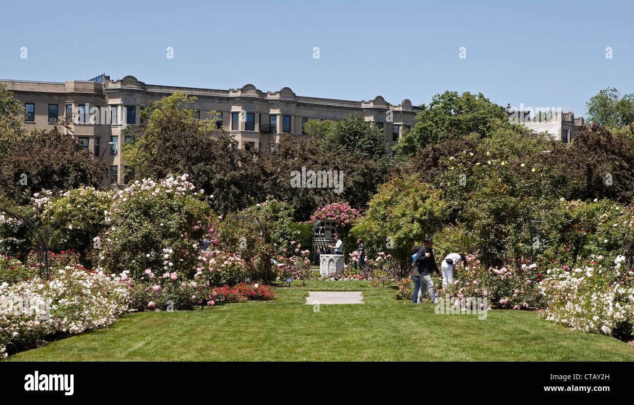 The James P. Kelleher Rose Garden is part of Boston\'s Emerald Stock ...