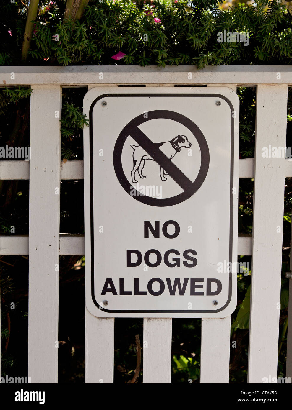 A sign on a fence says that no dogs are allowed. - Stock Image