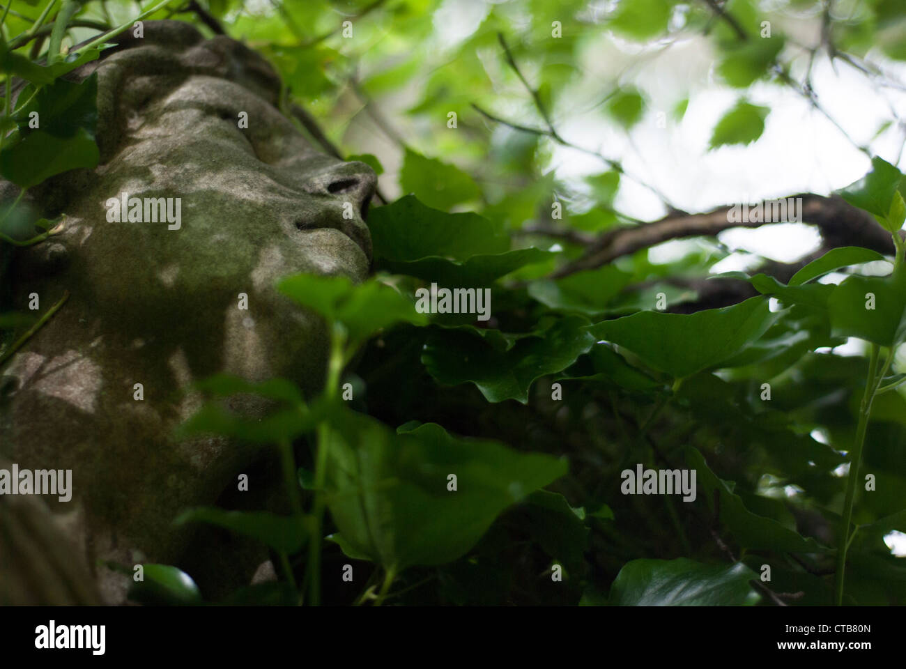 Closeup of a stone carving of an angels face with a serene, reflective expression looking upward through overgrown - Stock Image
