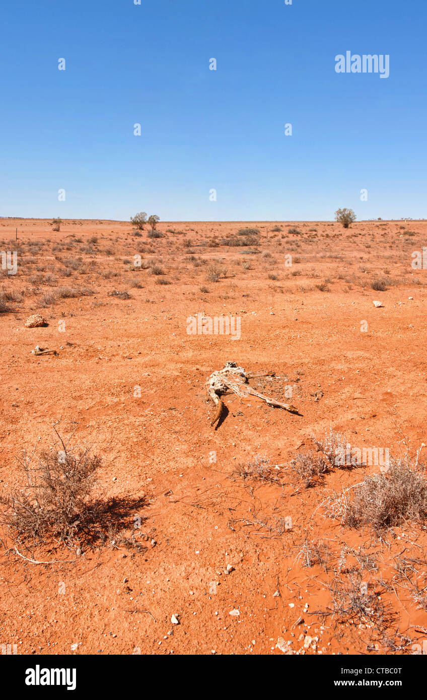 australian red desert outback is dry and barren - Stock Image