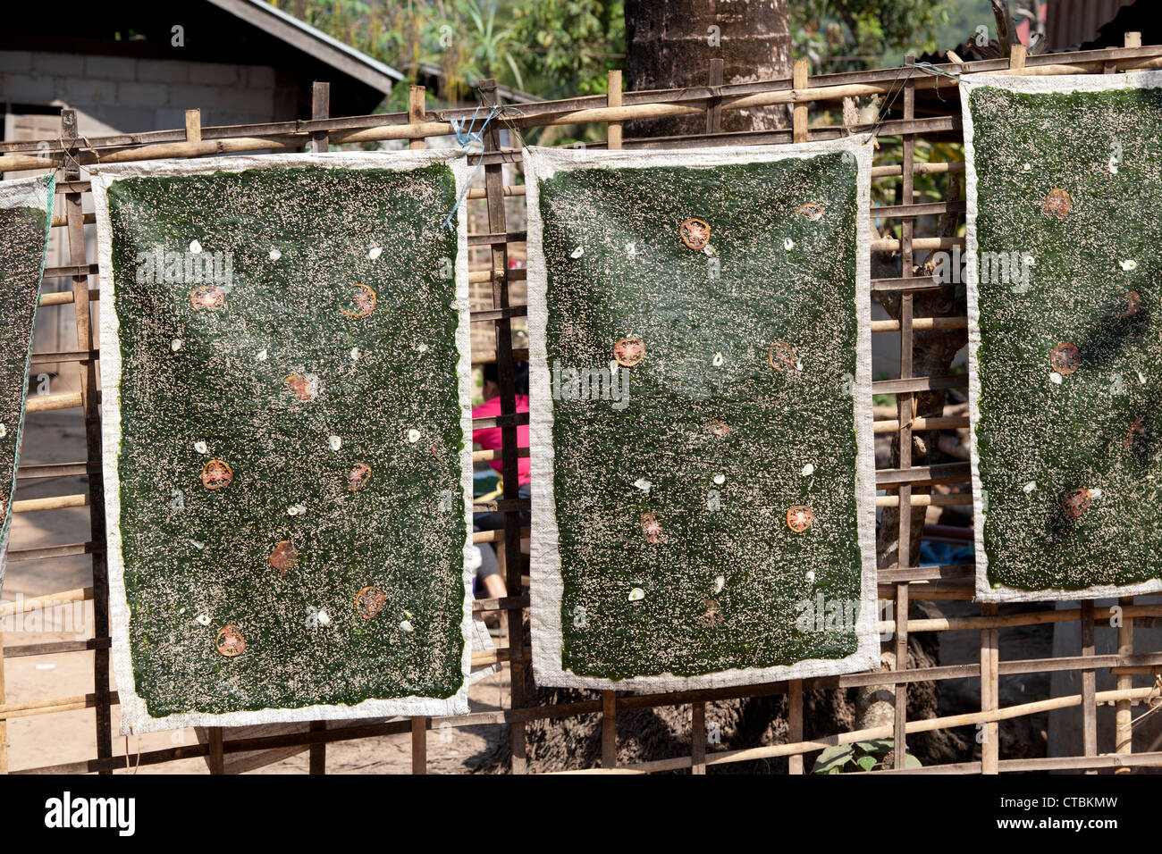 Thin sheets of river weeds hung to dry out on a fence (Muang Ngoi Neua - Laos). Plaques d'algues de rivières - Stock Image