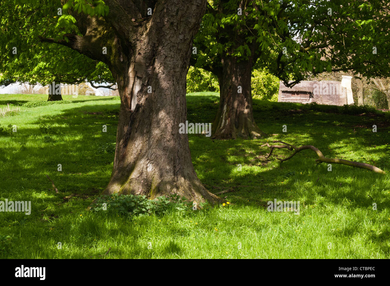 A glimpse through the trees of a replica 17th Century farmstead within the parkland of Holdenby House, Northamptonshire, - Stock Image