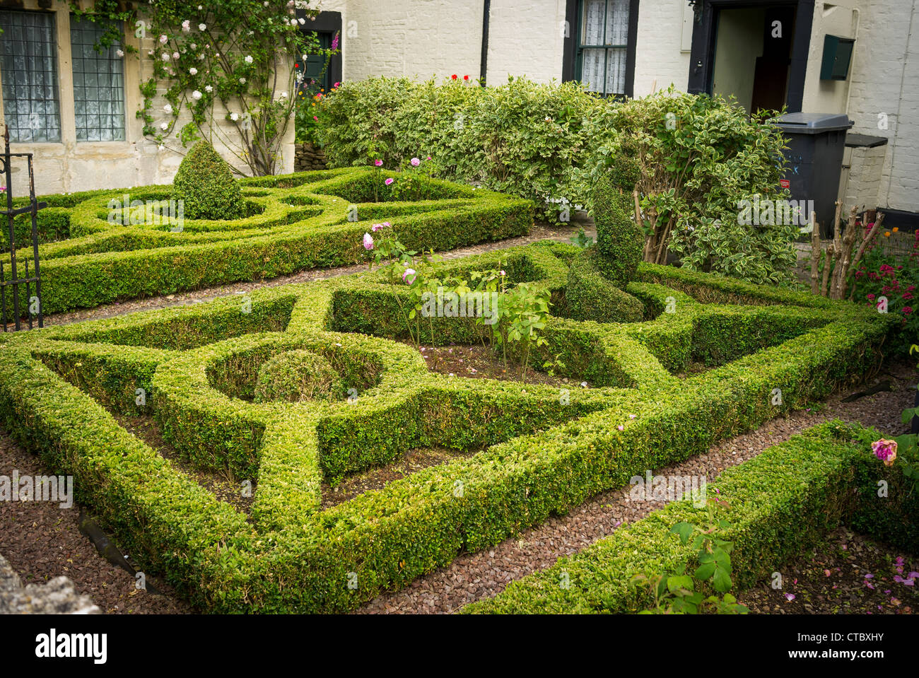 Neat box parterre in small town garden - Stock Image