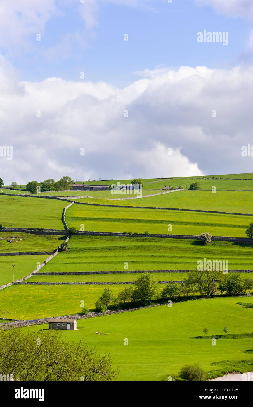 Pastureland, Burnsall, Yorkshire Dales - Stock Image