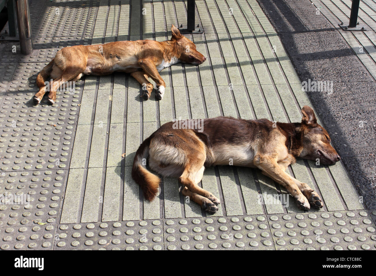 Dogs asleep Stock Photo