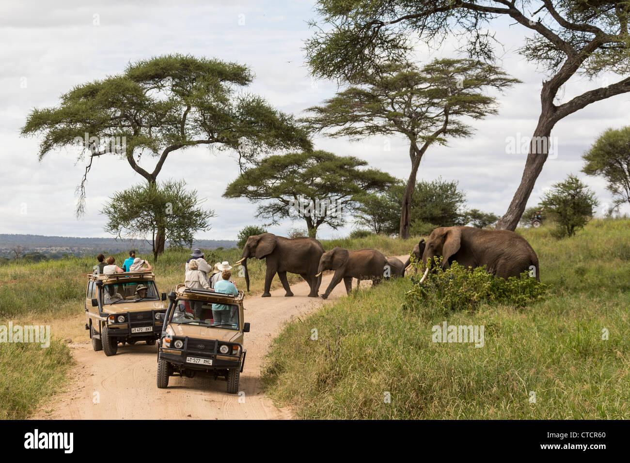 Safari group watching elephants crossing a road - Stock Image