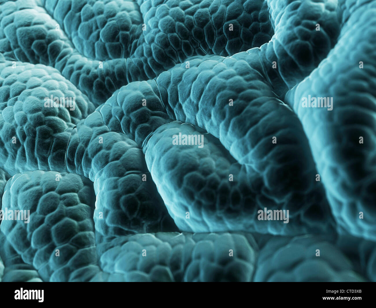Stomach lining  artwork - Stock Image