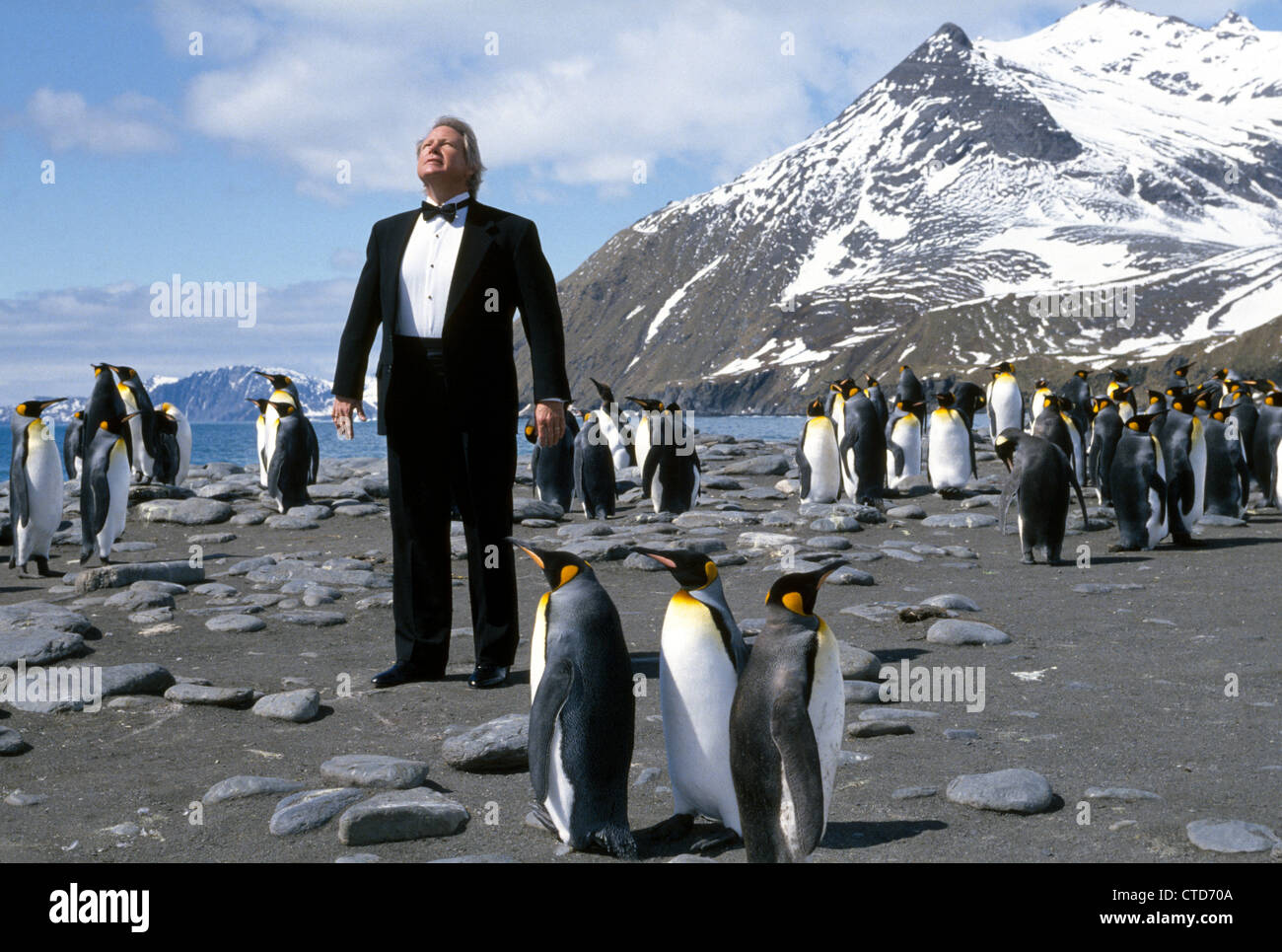 A visitor to Antarctica dresses appropriately in a tuxedo to mimic the King Penguins at Gold Harbor on South Georgia - Stock Image