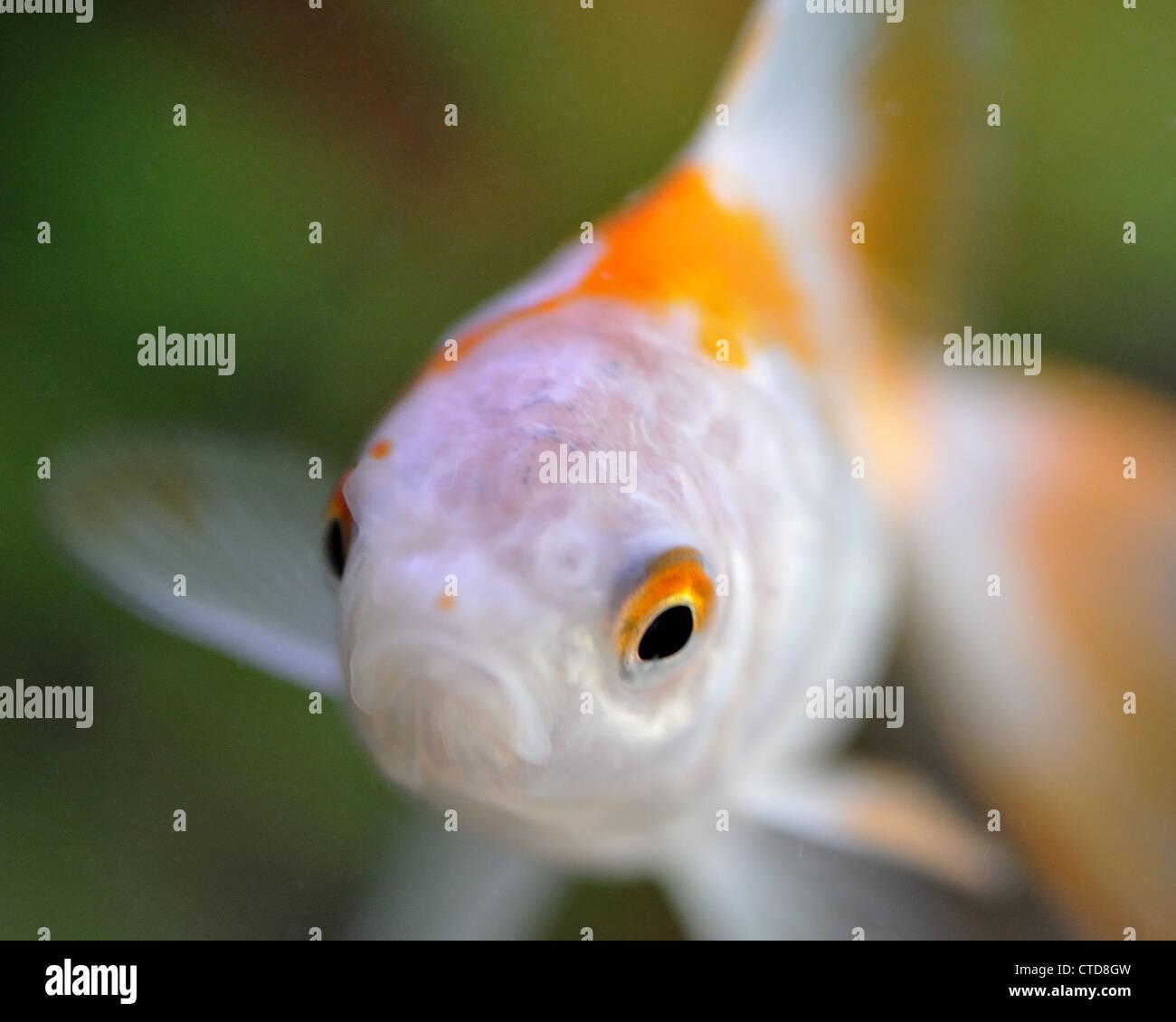 Macro image of a fish - Stock Image