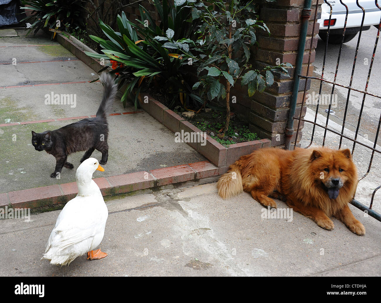 Unusual family in Colombia. - Stock Image