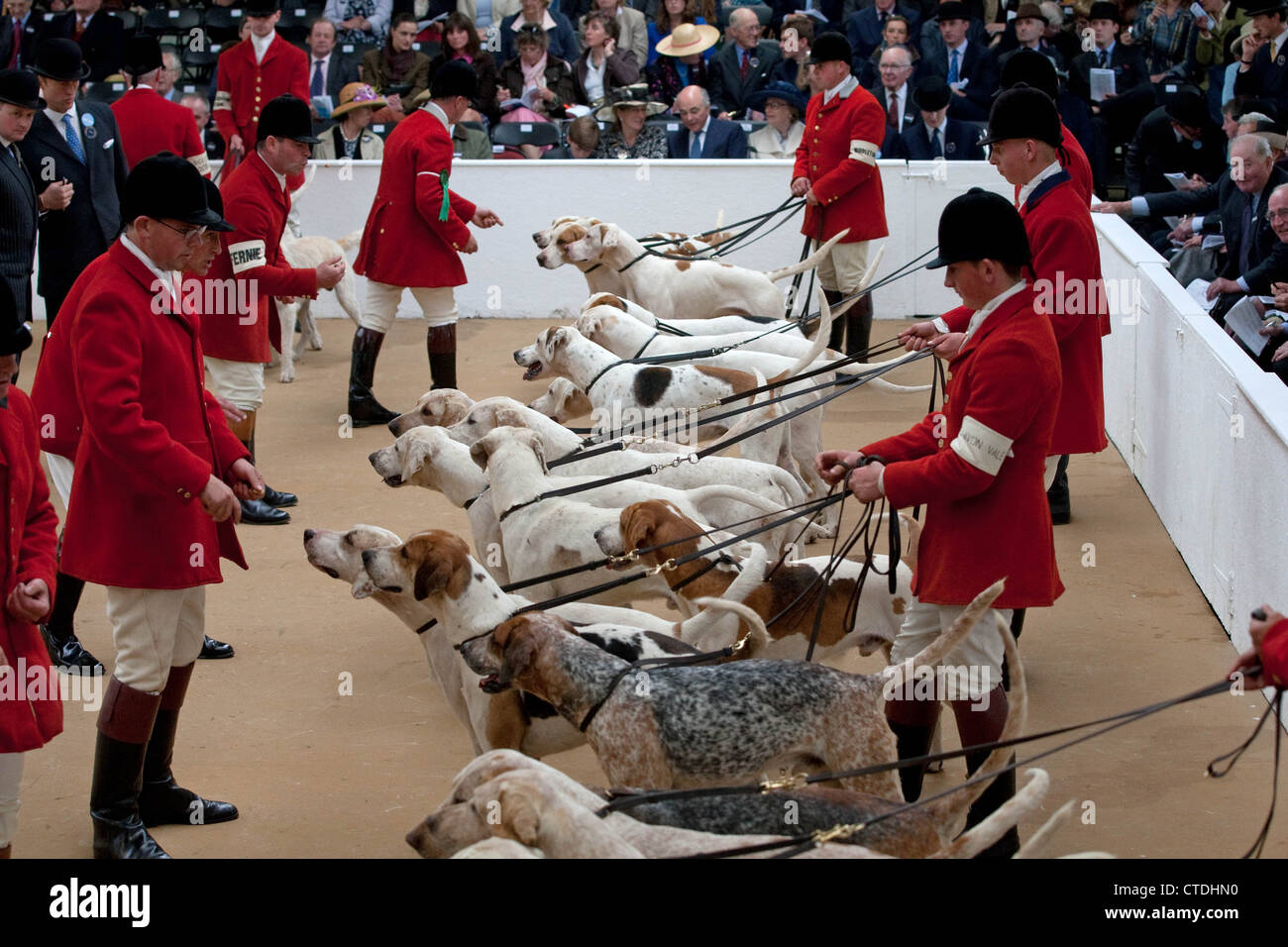 Fox hunts from across the country show hounds at the 2012 Royal Fox Hound Show held at the Festival of Hunting - Stock Image